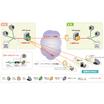 パートナーソリューション『PacketiX VPN 4.0』 製品画像