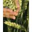 農作物、ハーブ、包装済み製品、液状製品、液卵の殺菌 製品画像