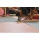 『クッション性があって滑らない』人とペットが一緒にくつろげる畳 製品画像