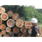 木材打込専用RFIDタグ『OHTAG』 製品画像