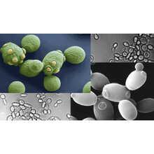 化粧品原料 Carboxymethylglucan(天然多糖類) 製品画像