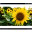 デジタルサイネージソフト「SmartSignage」 製品画像