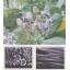 未利用植物素材『カミドーリ(種子包繊維)』 製品画像