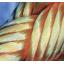 有限会社テクノ富士 の『ペーパーキャリアロープ』 製品画像