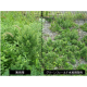 植栽地の省管理技術『グリーンフィールド』 製品画像