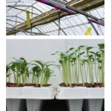 【施設園芸事業】苗向け補光LED照明(光環境構築) 製品画像