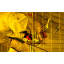 ■事業紹介:真空配管・ガス配管・真空ポンプの取外し等の現地工事 製品画像