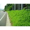 壁面(砂防堰堤)緑化【施工事例】 製品画像