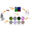 iXCells Biotechnologies 社についてご紹介 製品画像