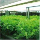 完全人工光型植物工場 製品画像