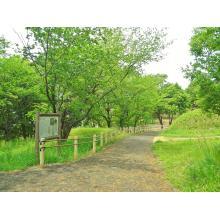 環境と人に優しい「木」を使ったアスファルト舗装!【※事例集進呈】 製品画像