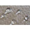 【PFOA・PFOS非含有の表面改質剤】滲み防止・撥油剤 製品画像