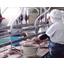 水産加工機械 バキューム式 血合い・内蔵取り機 製品画像