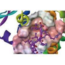 【資料】包括的なタンパク質モデリング - 高分子モデリング 製品画像