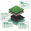 屋上緑化専用芝 製品画像