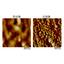 AFM(原子間力顕微鏡) 製品画像