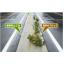『雑草防止工法 WP』 製品画像