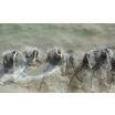 トンネル補助工法専用セメント注入システム『ファドム工法』 製品画像