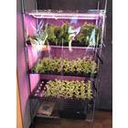 簡易水耕栽培システム 製品画像