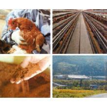 飼料としてのマテラパウダー 製品画像