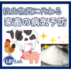 抗生物質に代わる、家畜の病気予防【LBSカルチャー】 製品画像
