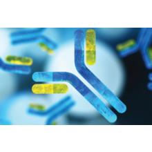 ソリューション概要:抗体開発 製品画像