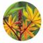 硬化ヒマシ油の生分解性パウダー『NatureFine H325』 製品画像