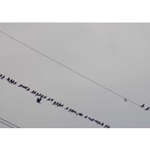 【鳥害対策サービス事例】電力・通信(鉄塔・ケーブル等) 製品画像