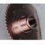 銅合金の腕時計部品のバーリング加工事例 製品画像
