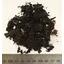 『腐葉土』 製品画像