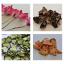 【乾燥サンプル写真紹介】多種多様の物を綺麗に乾燥!キハラの乾燥機 製品画像