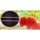 【イチゴ補光用】植物育成LED照明『EZYGRO赤・白』 製品画像