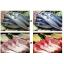 美味色 食品用3波長型直管LEDライト 精肉用/鮮魚用 製品画像