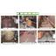 高機能メタクリル樹脂系床材『アクリトーンフロアー』 製品画像