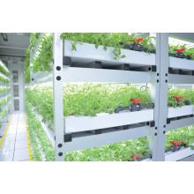 機能性野菜を生産する「植物ストレス負荷型栽培装置」 製品画像